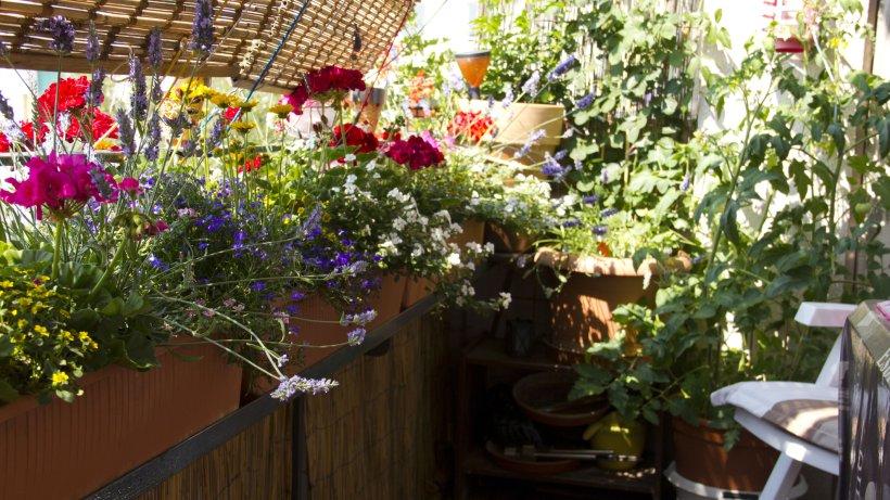pflegeleichte balkonpflanzen tolle tipps zur bl tenpracht bild der frau. Black Bedroom Furniture Sets. Home Design Ideas