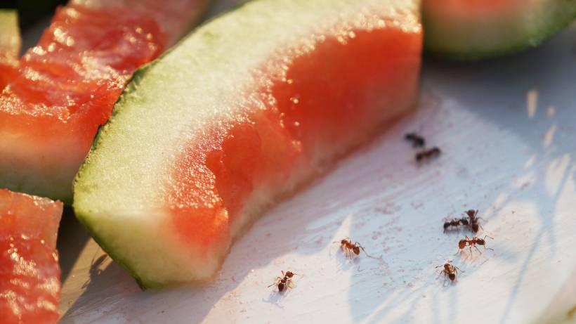 Hausmittel Gegen Ameisen Mit Diesen 10 Tricks Werden Sie Sie Los