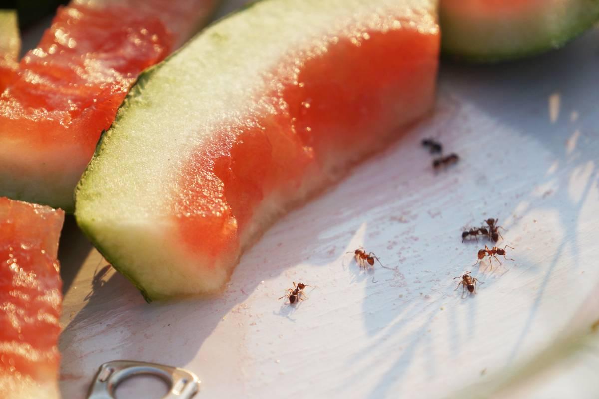Hausmittel gegen Ameisen: Mit diesen 10 Tricks werden Sie sie los ...