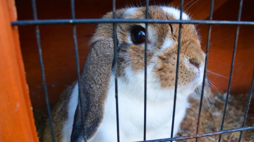 wie kann man kaninchen abnehmen