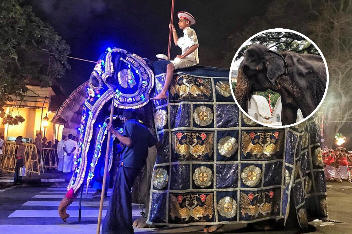 Tierquälerei: So schlimm sehen diese Elefanten unterm Kostüm aus