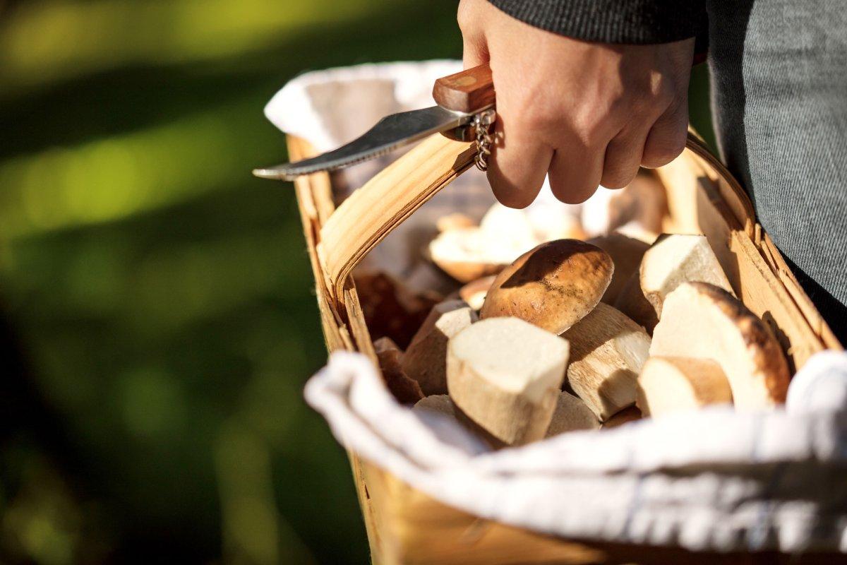 Pilze sammeln: Mit diesen Tipps Anzeige und Lebensgefahr meiden