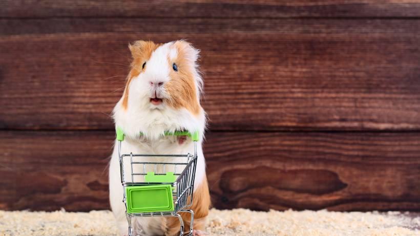 Hamsterkaufe Wegen Corona Sinnvoll Oder Doch Nur Witzig