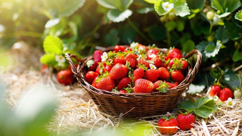 Erdbeeren Salzwasser Waschen