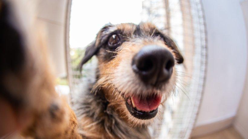 Erfinderin baut erste Photo-Booth für Hunde-Selfies