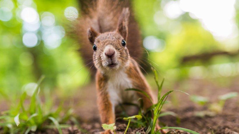 So locken Sie Eichhörnchen in den heimischen Garten