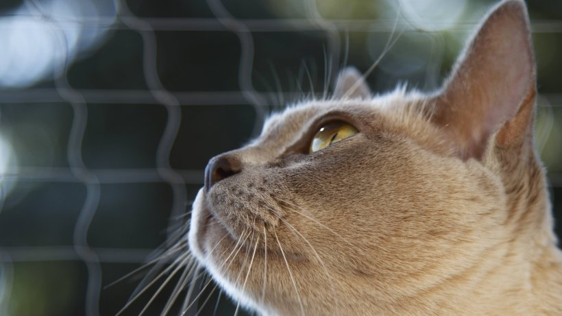 Darf der Vermieter ein Katzennetz auf dem Balkon verbieten?