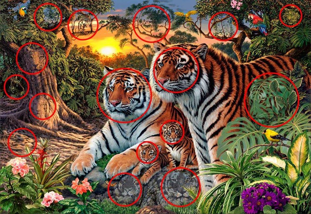 Es sind insgesamt 16 Tiger.