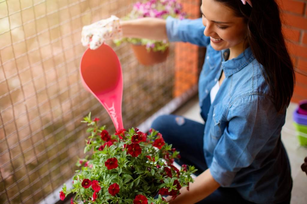Langbluhende Balkonpflanzen Von Mai Bis Oktober Experten Talk