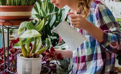 Blumen Gießen Mondkalender