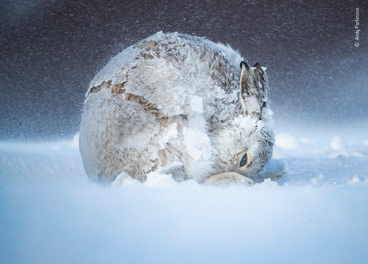 Beim renommierten Fotowettbewerb Wildlife Photographer of the Year werden jedes Jahr Tausende atemberaubende Fotos eingereicht. Sehen Sie hier einige der schönsten Aufnahmen.