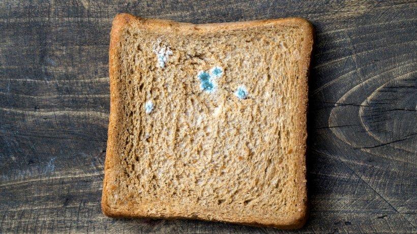 Schimmeliges Toast Gegessen
