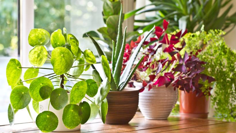 Diese Funf Zimmerpflanzen Sind Gut Fur Ihre Gesundheit Bildderfrau De