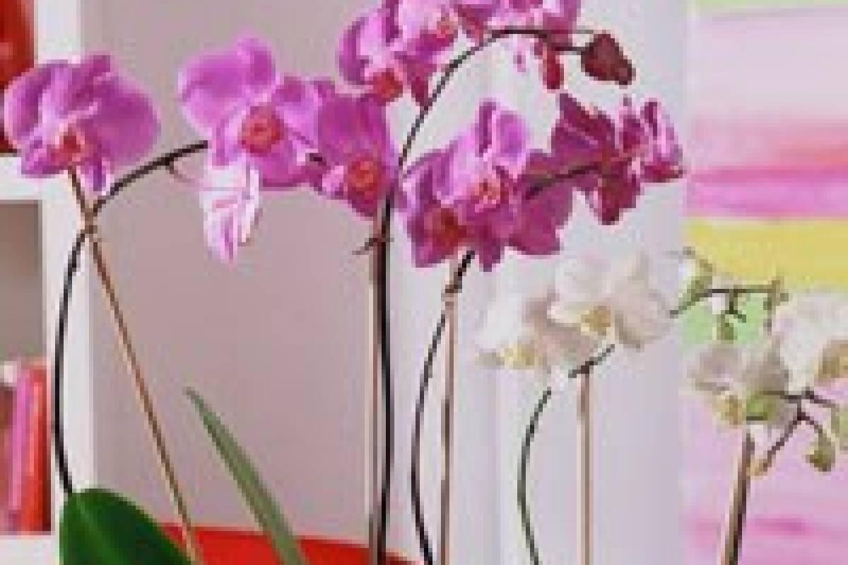 orchideendünger hausmittel