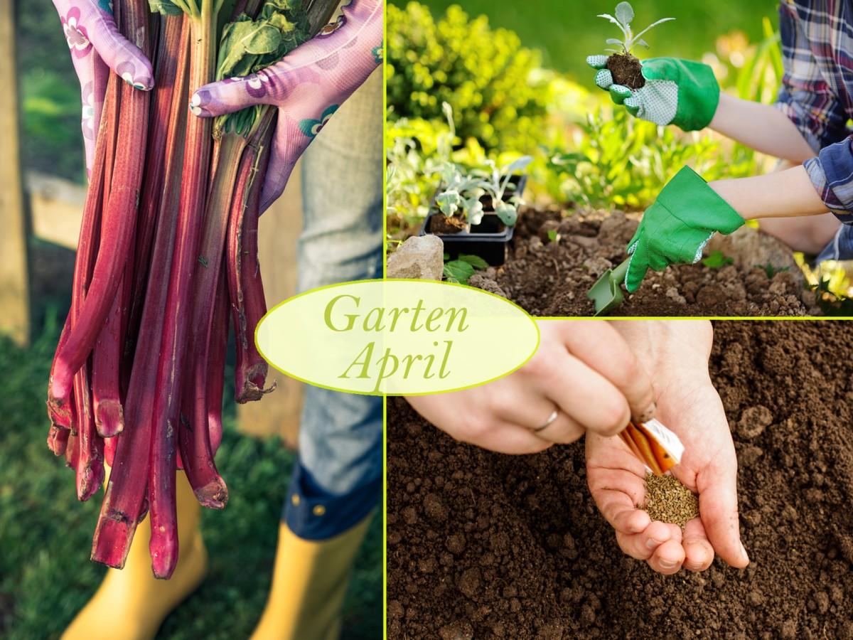 Gartenarbeiten im April Was Hobbygärtner jetzt tun sollten ...