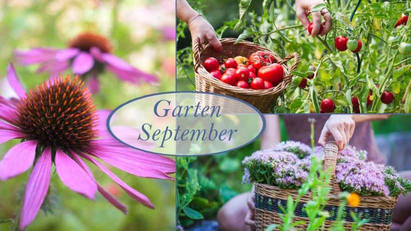 Gartenarbeit Im September