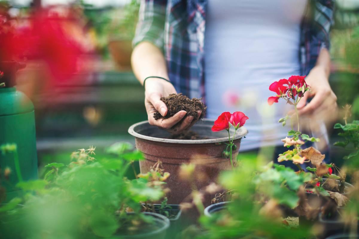 Minifliegen Auf Blumenerde Das Hilft Gegen Trauermucken Bildderfrau De