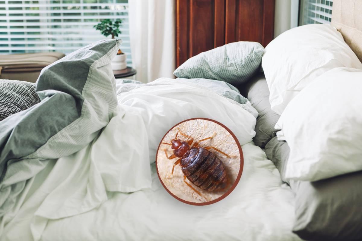 Bettwanzen Erkennen Und Mit Diesen Tipps Loswerden Bildderfrau De