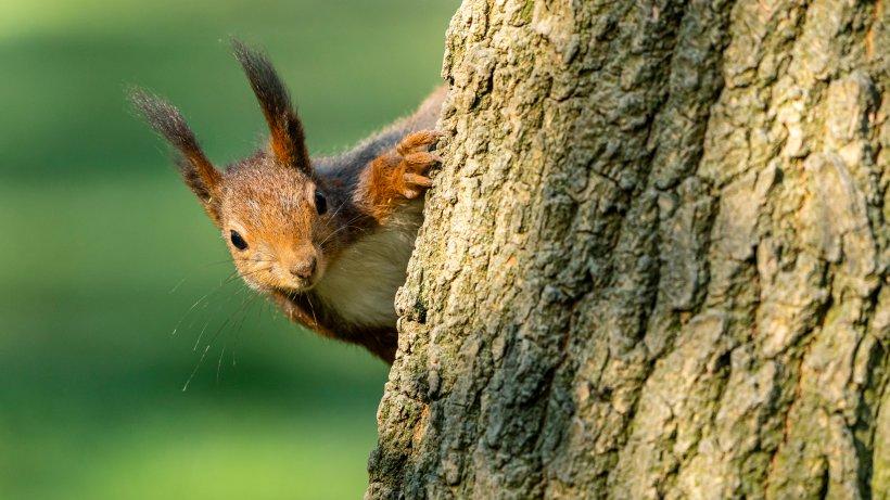glücksforschung eichhörnchen können glücklich machen