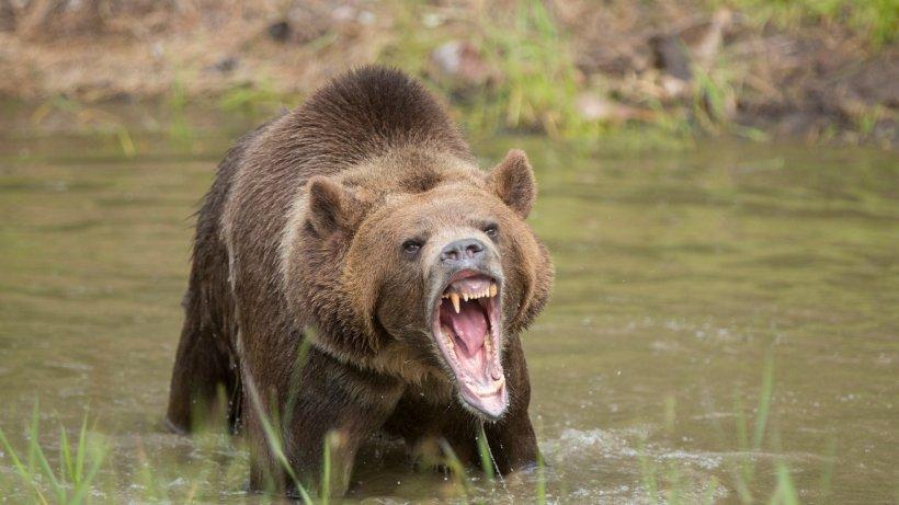 Alaska backpage frauen suchen männer