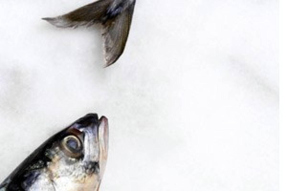 Fisch Gesund Und Lecker Bildderfraude
