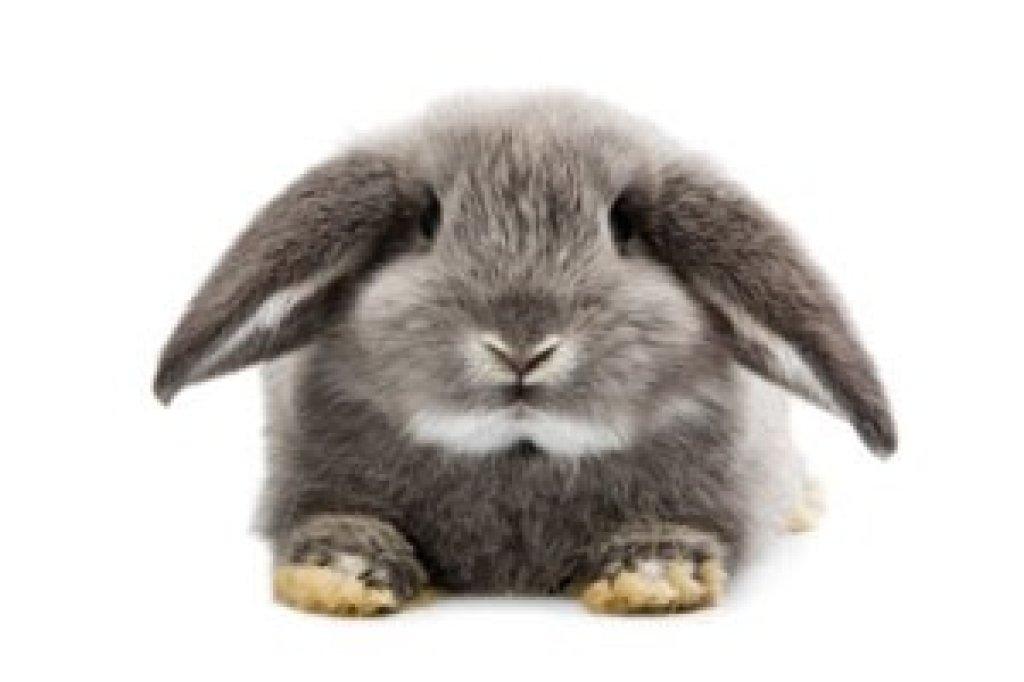 Niedlich Maschendraht Kaninchen Fotos - Elektrische ...