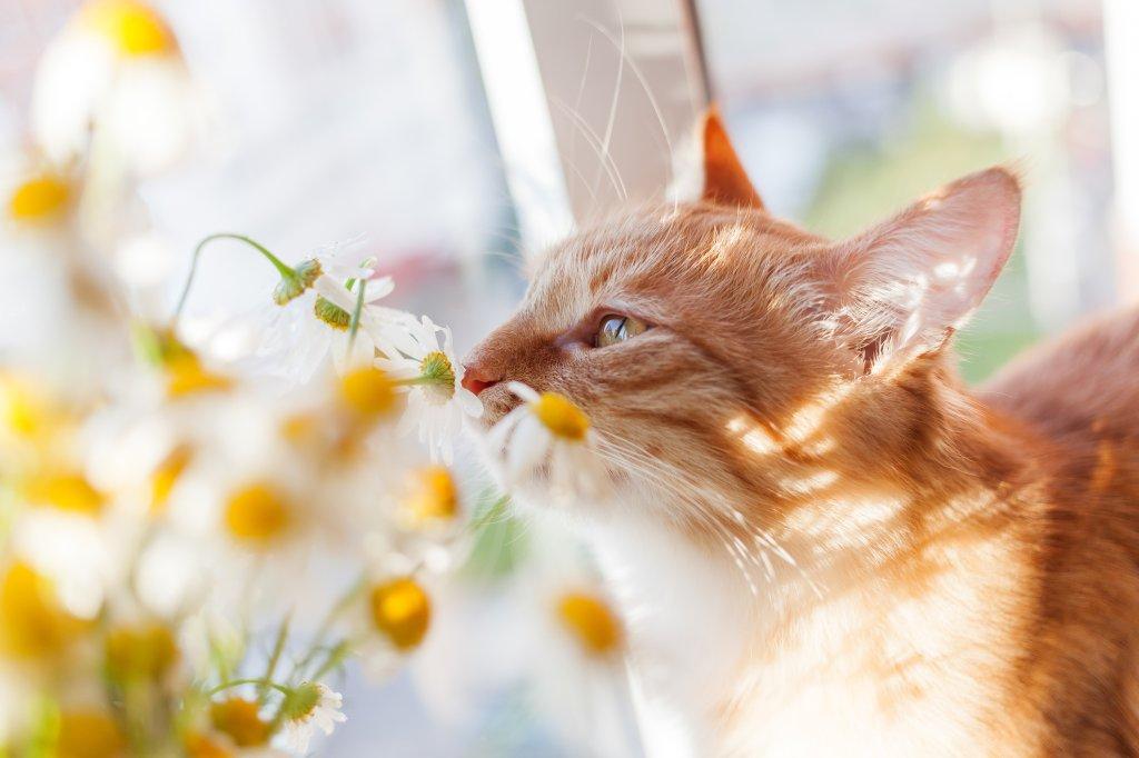 Elefantenfuß Katze welche zimmerpflanzen sind für hunde und katzen giftig bild der frau